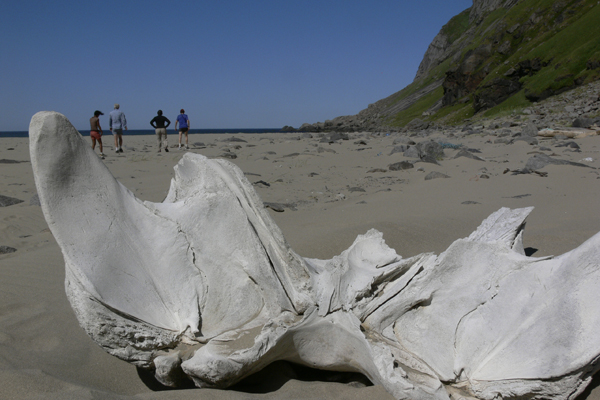 Whale bone in Lofoten with Crossing Latitudes